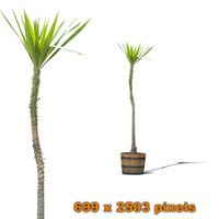 Palm bush 3