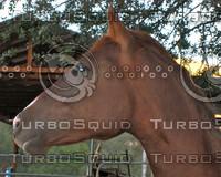 perfect horse head.jpg