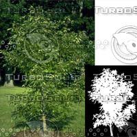 Tree Short