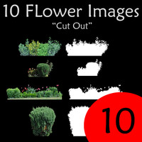 10 Cut Out Flowers