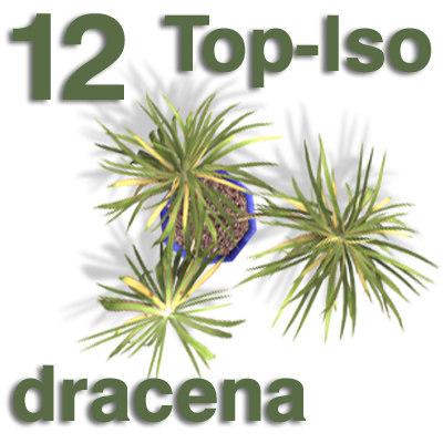 top_dracena.jpg