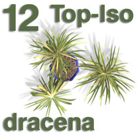 Top Views - dracena