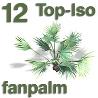 Top Views - fanpalm