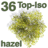Top Views - hazel