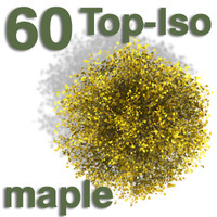 Top Views - maple