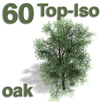 Top Views - oak