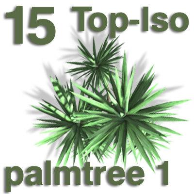 top_palm1.jpg