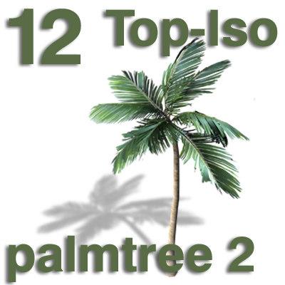 top_palm2.jpg