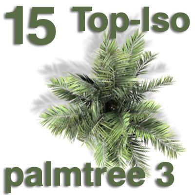 top_palm3.jpg