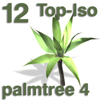 top_palm4.jpg