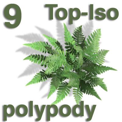 top_polypody.jpg
