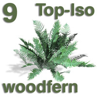 Top Views - woodfern