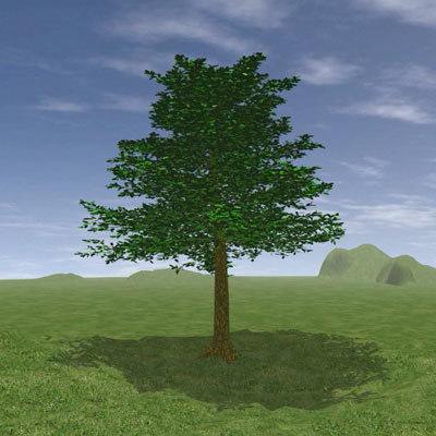 tree03.jpg