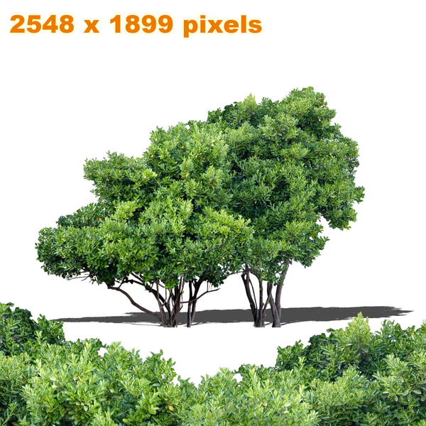 Garden trees png images for Garden trees b q