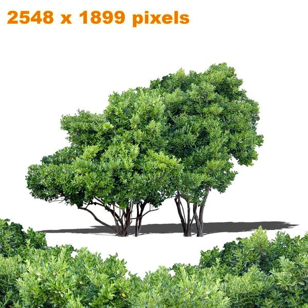 Texture png tree deciduous garden for Garden deciduous trees