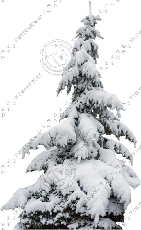 wintertree16.psd