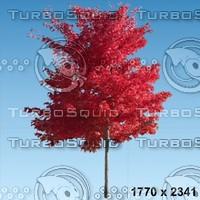 02_tree_autumn006.zip