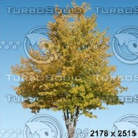 02_tree_autumn007.zip