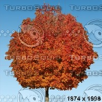 02_tree_autumn010.zip