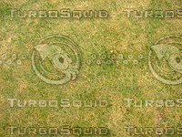 Lawn  20090119 103