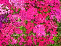 Flower 20090328 097