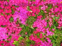 Flower 20090328 099