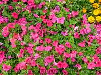 Flower 20090405 003
