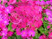 Flower 20090405 005