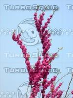 Flower 20090405 033