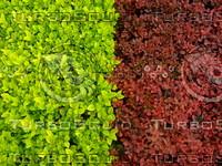 Plant  20090415 017