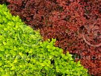 Plant 20090415 019