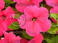 Flower 20090423 055