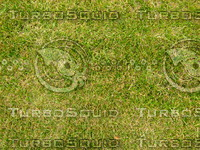 Lawn 20090530 001