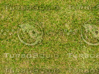 Lawn 20090530 005