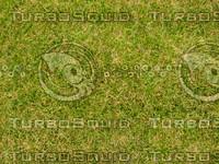 Lawn 20090530 006