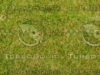Lawn 20090530 009