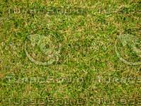 Lawn 20090530 017