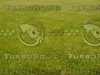 Lawn  20090530 018