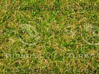 Lawn 20090530 020