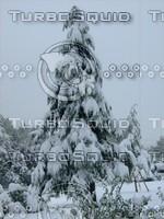 Snow Tree 20091112 130