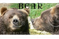 Bear front side Image