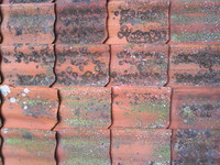 Swedish farm roof tile