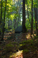 Forest in Guntersville
