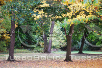 Four Trees.jpg