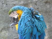 parrot_01