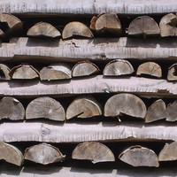 Wood Boles Texture