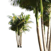 alexander-palm.png