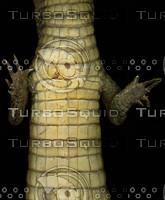 crocodile_03.jpg