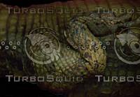 crocodile_14.jpg