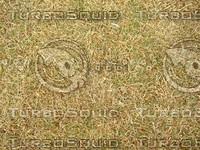 Lawn Carpet cz3 136